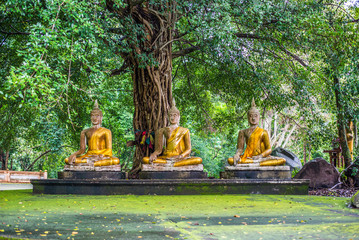 Buddhas old beneath trees.