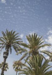 Palm trees over sky