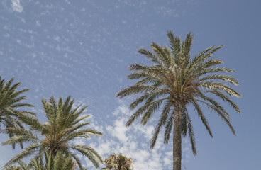 Palm trees over sky