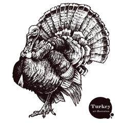 Turkey vector illustration. Thanksgiving Day