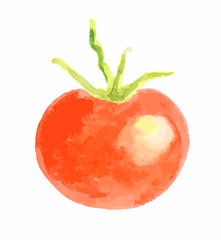 Isolated watercolor tomato on white background. Healthy and ripe fresh vegetable for cooking and decoration.