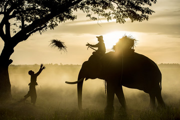 Silhouette Elephant Sunset. Mahout riding an elephant on the sun