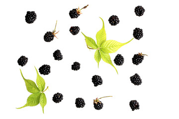 blackberry berry on a white background top view of a flat style summer fresh berries pattern