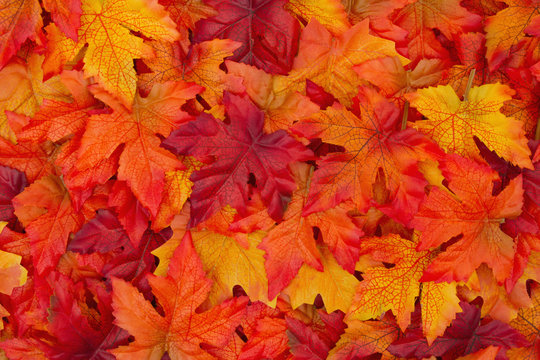Fall Background Photos Royalty Free Images Graphics Vectors Videos Adobe Stock