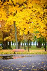 Autumn Park after rain. Autumn time