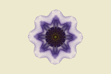 Flower mandala against white background