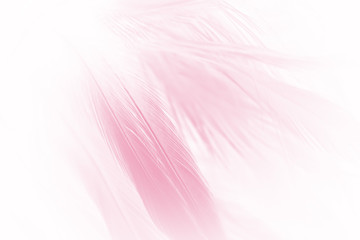 soft pink vintage color trends chicken feather texture background Wall mural