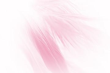 soft pink vintage color trends chicken feather texture background Fotoväggar
