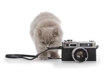 jeune chatte de race british long hair couleur lilac avec appareil photo vintage
