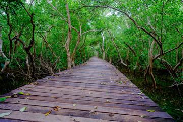 Mangrove forest with wood walkway bridge and leaves of tree.Phetchaburi ,Thailand. Photo taken on: Octuber 29, 2016