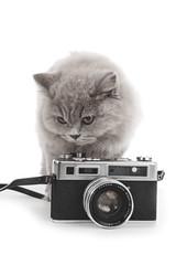 portrait jeune chatte de race british long hair couleur lilac avec appareil photo vintage