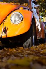 herfst in reflectie