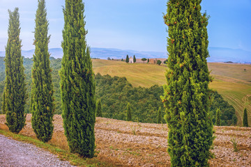 Fotomurales - Tuscany landscape, Italy