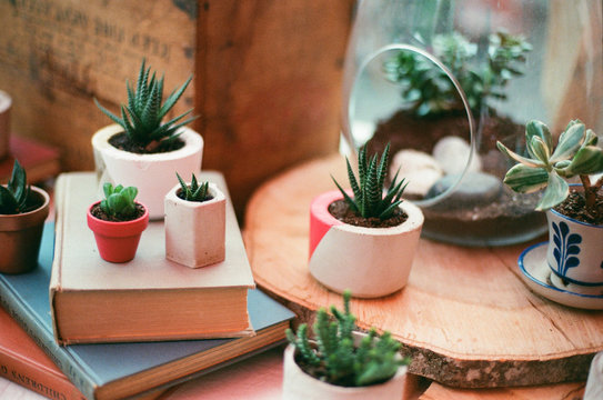 Succulents in Concrete Planters and Terrariums Sitting on Vintage Books