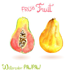 Bright vector watercolor hand drawn fruit pawpaw