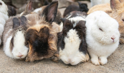 The four of cute rabbits sleeping on the Large rocks, thailand