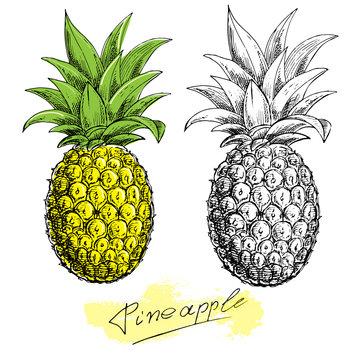 hand drawn sketch illustration pineapple