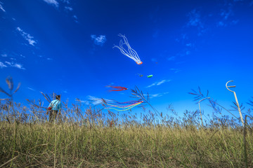watching the kites in the sky