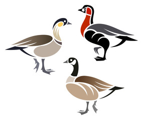 Stylized Geese - Cackling Goose, Hawaiian Goose, Red-breasted Goose
