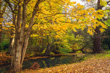 Autumn scenery with yellow leaves on trees