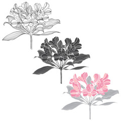 Alstromeria. Isolated vector elements on a white background.