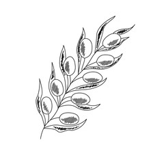 Olive branch with berry and leaf diet plant superfood ingredient. Natural organic hand drawn vector sketch illustration. Isolated on white background. Olive black, green, oil.