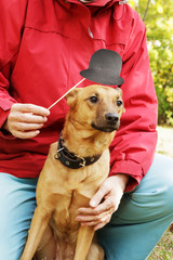 Old, smiling woman holding paper hat on stick close to dog's muzzle. Dog in funny, fake hat with ownerin park.