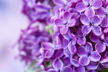 In de dag Lilac Blooming lilac flowers. Macro photo.
