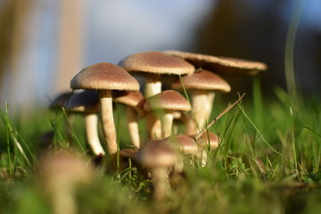 a group of mushrooms in the grass