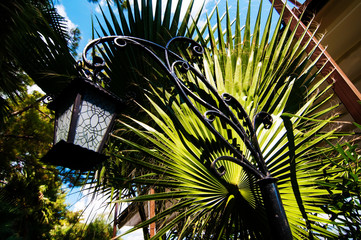 A street lamp of wrought iron in a tropic country with fresh palm tree leaf behind it, summer traveling