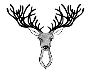 deer head. Beautiful horns. speaking look. Vector illustration
