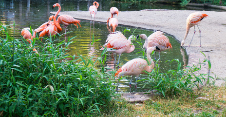 flamingos are standing zoo in Prague