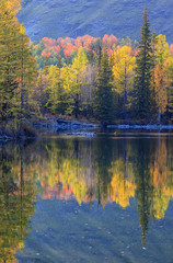 Printed kitchen splashbacks Autumn autumn forest reflected in water in the evening