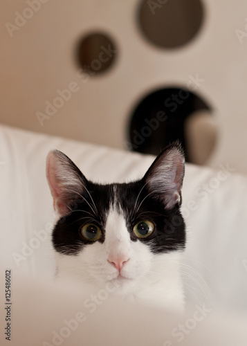"Image De Chat Noir Et Blanc tête de chat noir et blanc"" stock photo and royalty-free images on"
