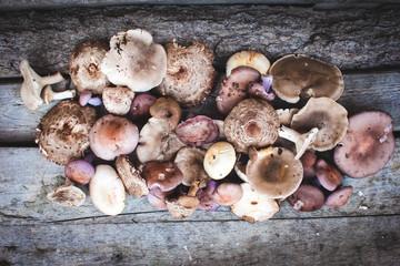 Fresh boletus mushrooms and dry mushroom on wooden table, overhead