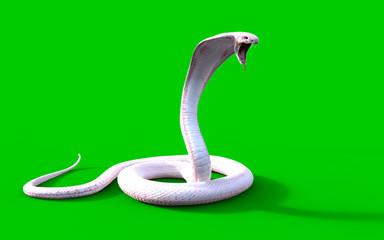 3d Albino king cobra snake isolated on green background, snake attack, king cobra