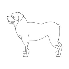 Rottweiler dog linear