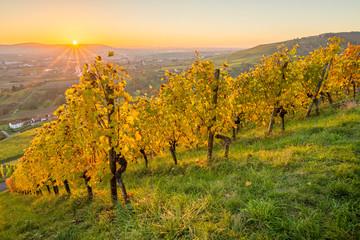 Fototapete - Landschaft Weinberg im Herbst mit Sonnenstrahlen