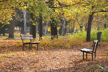 Wall Mural - several wooden benches in the park in autumn and pavement completely covered with fallen leaves