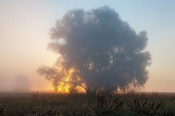 Sunrise in countryside