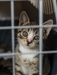 Stray kitten with sad expression looking out from a cage - vertical.