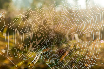 Spider web close-up