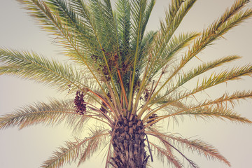 Top of palm tree on sky outdoors background