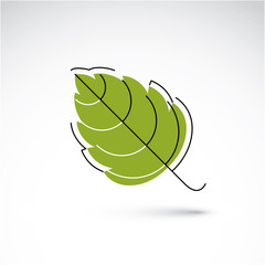 Hand-drawn illustration of simple hazel tree leaf isolated. Gree