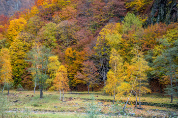 Autumn landscape. Fall in a mountain forest.