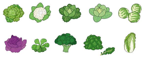 Verschiedene Kohl- und Salatsorten