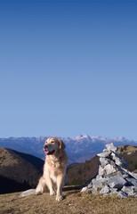 Golden retriever happy on top of a mountain in Slovenia