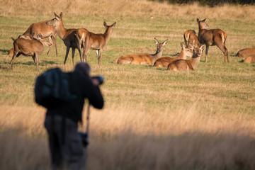 Wildlife photographer taking photos of deer.