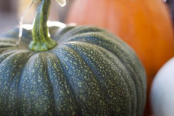 A close-up shot of a green pumpkin.