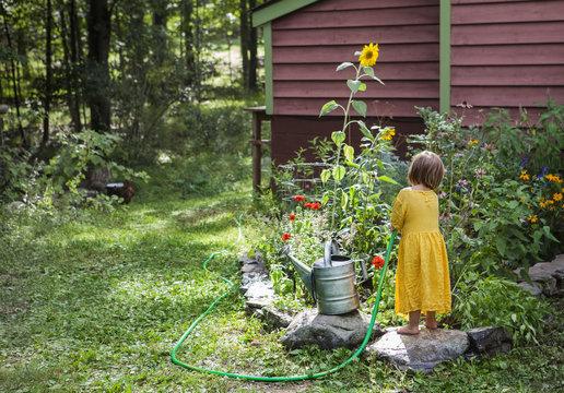 Rear view of girl watering plants in backyard